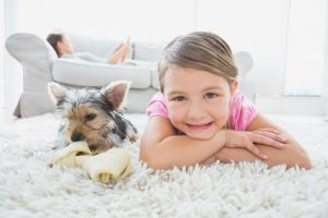 Avondale Carpet Cleaning Specials